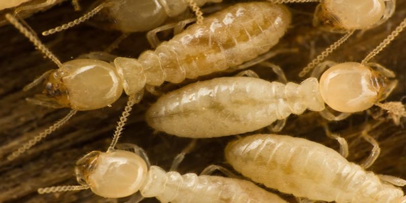 Diagnostic immobilier termites par cher